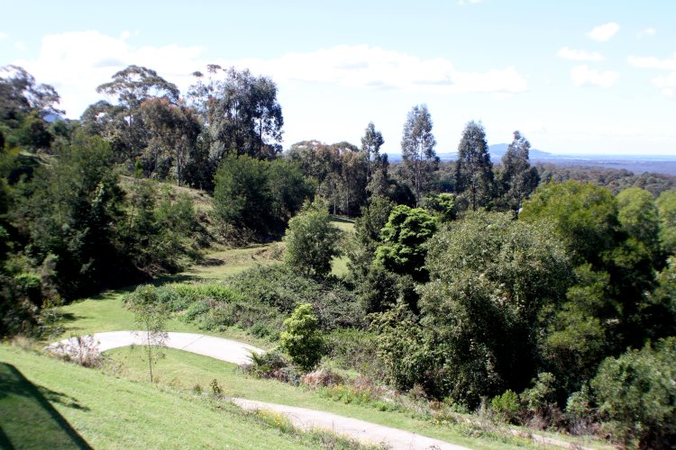 wisteria (10)