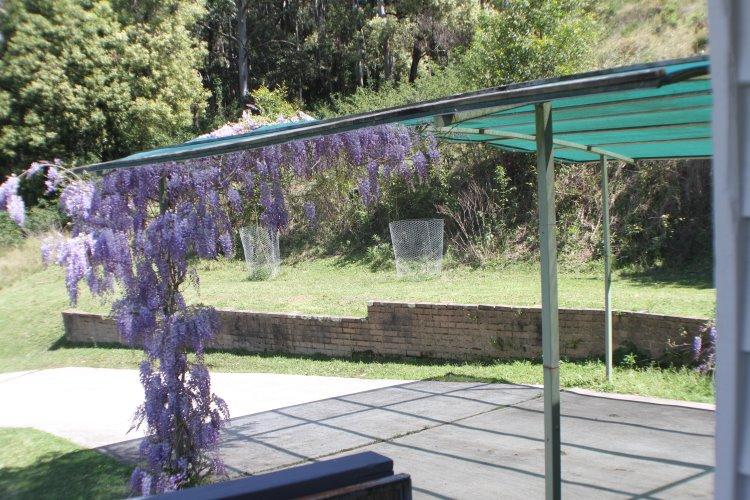 wisteria (6)